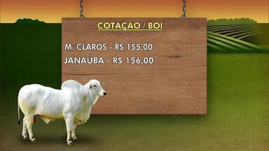 Confira os preços da arroba do boi e da saca do feijão - Arroba do boi está sendo vendida a R$ 155 em Montes Claros.