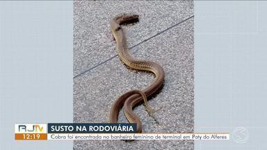 Cobra é encontrada no banheiro feminino da rodoviária de Paty do Alferes - Animal é da espécie cobra-d'água, que não é venenosa, diz bióloga.