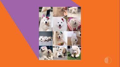 Conheça a pet influencer Bela - Assista ao vídeo!