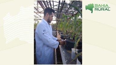 G1 no campo: baiano desenvolve estudo que torna vegetação mais resistente ao solo - O trabalho promete soluções para que plantas consigam crescer em regiões que sofrem com a seca.