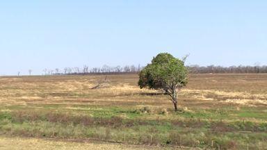 Queimadas trazem prejuízos para produtores no Triângulo Mineiro - Alguns criadores tiveram que vender animais ou deixar negócios por falta de pasto.
