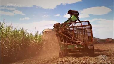Inovações tecnológicas modificam a forma de criar e fazer o cultivo no campo - Inovações tecnológicas modificam a forma de criar e fazer o cultivo no campo