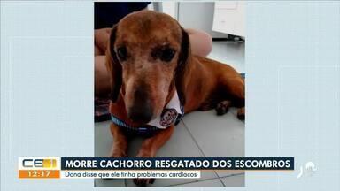 Morre cachorro resgatado dos escombros - Saiba mais no g1.com.br/ce