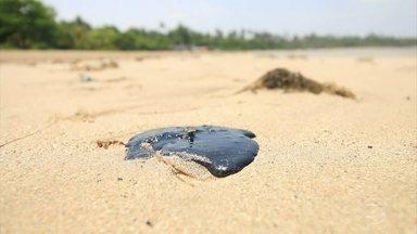 Mutirão de limpeza atua em manguezal, que foi atingido na quinta praia, em Morro de SP, BA - A área atingida se espalha pela foz do rio Panã, que corta uma parte da Ilha de Tinharé, onde fica Morro de São Paulo. A praia não é muito frequentada pelos turistas por causa da distância