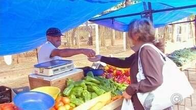 Tomate está mais barato nos supermercados e feiras - Preço do tomate é um dos destaques na feira e nos supermercados. Ele está mais barato e para quem quer economizar nas compras é uma boa opção.