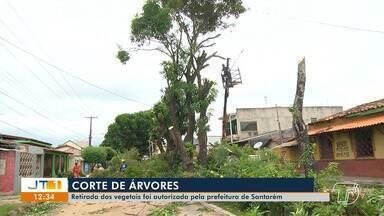 Corte de árvores na rua Assis de Vasconcelos foi autorizado pela Prefeitura de Santarém - Estação elevatória de esgoto está sendo construída no local.