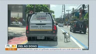 Cachorro percorre 1 km atrás de viatura que levava dono em Volta Redonda - Caso inusitado aconteceu durante uma operação conjunta entre a Guarda Municipal e as polícias Civil e Militar.