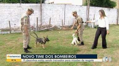 Bombeiros treinam cães, em Goiás - Desde pequenos, eles aprendem comandos para ajudar em ações.