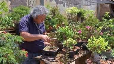 Plantas ficam internadas em 'Hospital de Bonsai' - Acompanhar o desenvolvimento de um bonsai é uma terapia para muita gente. Mas para ter uma planta vistosa, a pessoa tem que ter paciência e tempo para tomar todos os cuidados necessários. E nem sempre é isso que acontece.
