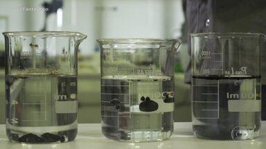 Experimentos mostram como manchas de óleo estão se espalhando pelo Nordeste - Testes feitos na UFRJ com óleo compatível com o da Venezuela mostram que boa parte das manchas não chega a boiar na superfície, mas também não afunda - fica à mercê da corrente.