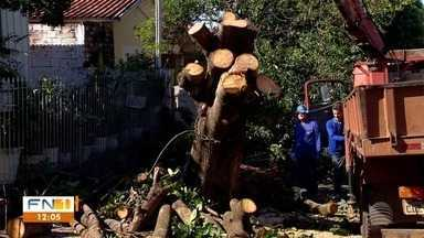Trabalhos de limpeza e recuperação são iniciados após fortes chuva e vento - Muitas árvores caíram e vários estragos foram registrados em Presidente Prudente.