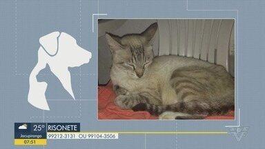 Gatos somem de casa e donos pedem ajuda - Uma gata fugiu no Canal 5, em Santos e um gatinho está perdido pelo Jocquei Clube, em São Vicente.