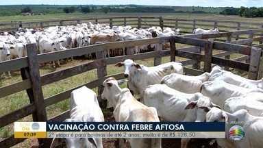 Inicia a segunda etapa da vacinação contra a febre aftosa - Cerca de 90 mil bovinos devem ser imunizados.