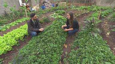 Hortas são opções para consumo de alimentos orgânicos - O plantio de hortaliças é uma alternativa econômica e saudável. Quem não tem espaço em casa pode recorrer a hortas comunitárias.