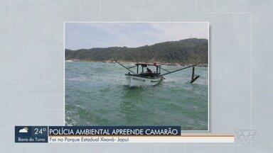 Polícia Ambiental apreende 80 kg de camarão ilegal em São Vicente - Pescado foi localizado em uma embarcação que realizada arrasto no Parque Estadual Xixová-Japuí.