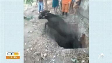 Vaca cai em fossa e bombeiros são chamados para fazer o resgate - Saiba mais no g1.com.br/ce