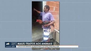 Rinhas são descobertas por denúncias anônimas - Este ano, a polícia ambiental registrou seis ocorrências do tipo no DF. Os casos são mais comuns em Vicente Pires, Arniqueira, Paranoá, São Sebastião e Brazlândia.