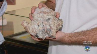 Vértebra de dinossauro é encontrada no interior de SP - Uma vértebra de dinossauro foi encontrada na zona rural de Uchoa (SP) por um biólogo e um paleontólogo durante uma expedição em busca de fósseis da espécie na região. A vértebra seria uma parte da cauda e foi encontrada pela dupla no dia 5 de outubro. A divulgação da descoberta foi feita nesta semana.