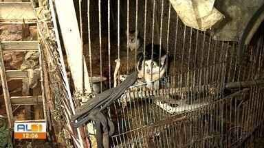 Animais em situação de maus-tratos são flagrados em residência de idosa em Maceió - Comissão de Bem Estar Animal da OAB e Polícia Civil foram acionadas após denúncias.