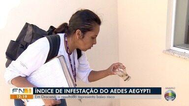 LIRAa indica baixo risco de infestação do Aedes aegypti em Dracena - Cidade tem 974 casos de dengue registrados neste ano.