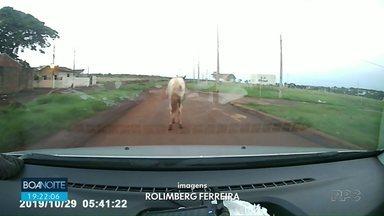 Flagrantes trânsito! - Telespectador registra cavalos no meio da rua em Sarandi