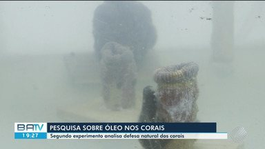 Corais com manchas de óleo morrem em dois dias de acordo com estudo em Porto Seguro - A descoberta foi de um grupo de pesquisadores que está estudando os impactos da substância no litoral do Nordeste.