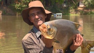 Os gigantes do Rio Pardo - Pacu-caranha de 8 quilos é surpresa em pescaria.