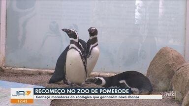 JA traz histórias de superação de animais acolhidos pelo zoológico de Pomerode - JA traz histórias de superação de animais acolhidos pelo zoológico de Pomerode