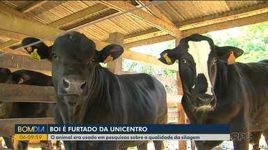 Animal usado para pesquisa em Universidade é furtado e abatido - Boi foi levado de campus da Unicentro que fica em área rural.