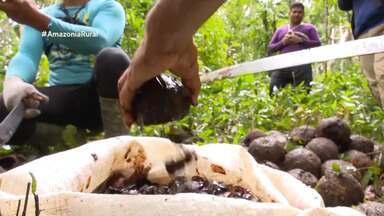 Assista a íntegra do Amazônia Rural deste domingo (17) - Assista a íntegra do Amazônia Rural deste domingo (17).