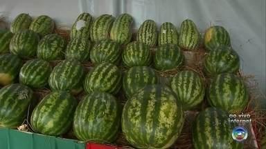 Oscar Bressane tem programação especial da Festa da Melancia - Em Oscar Bressane, a sétima edição da festa da melancia promete movimentar a cidade neste feriado. O município é considerado um dos maiores produtores da fruta no estado.