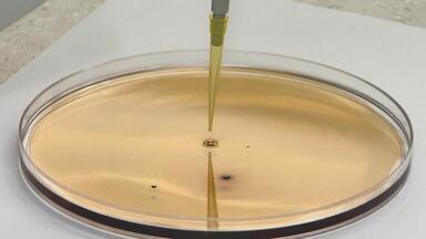 Pesquisa desenvolvida em Viçosa pode ajudar a remover óleo do litoral brasileiro - Trabalho foi realizado na Universidade Federal de Viçosa.