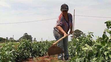 Presença feminina aumenta no comando de propriedades rurais em Uberaba - Crescimento acompanha tendência nacional, e mulheres passam a coordenar atividades no campo.