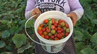 Produção de alimentos cultivados sem produtos químicos cresce no norte da Bahia - Na região do Vale do São Francisco, além de hortas, agricultores investem em frutas orgânicas.