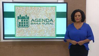 Agenda rural: Confira os eventos que acontecem na Bahia - Entre os eventos da semana está uma cavalgada em Olindina.