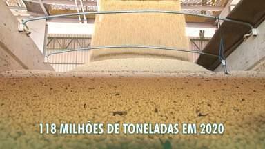 G1 no Campo: IBGE prevê aumento na produção de soja, milho e algodão na BA em 2020 - Com relação a soja, com a previsão, o estado deve contribuir para o aumento previsto de 4,7% na produção brasileira, que deve chegar a 118 milhões de toneladas no próximo ano.