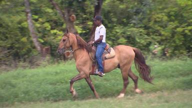 Cavalos campolina: concurso julga musicalidade da marcha do animal - Estado da Bahia já tem o segundo maior plantel do Brasil. A raça é genuinamente brasileira.