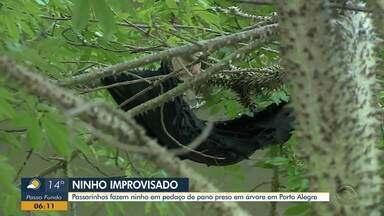 Passarinhos fazem ninho pedaço de pano preso em árvore em Porto Alegre - Assista ao vídeo.