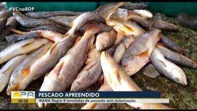 Ibama apreende toneladas de pescado sem autorização - Ibama apreende toneladas de pescado sem autorização