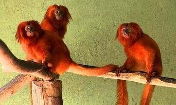Confira o programa Terra da Gente de hoje (30/11) - Centro de conservação de primatas ameaçados no Rio de Janeiro, pesca na amazônia em Rondônia e panna cotta como dica de sobremesa são os destaques das reportagens.