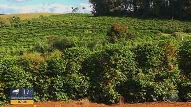 Balanço anual da Confederação Nacional da Agricultura prevê melhores preços para 2020 - Balanço anual da Confederação Nacional da Agricultura prevê melhores preços para 2020