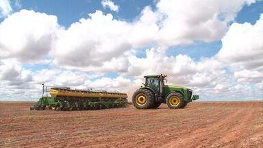 Agricultores do oeste baiano traçam estratégias para lidar com a pouca chuva - Eles tem utilizado alternativas no plantio e na colheita pra se adaptar a escassez. Confira.