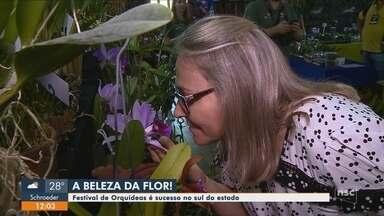 Festival de Orquídeas é a atração em Orleans - Festival de Orquídeas é a atração em Orleans