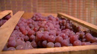 Produtores de Porto Feliz colhem safra de uva - Em tempos de safra, o vai e vem para colher os cachos de uva é intenso. E é importante manter a agilidade para não perder o ponto certo de maturação das frutas.