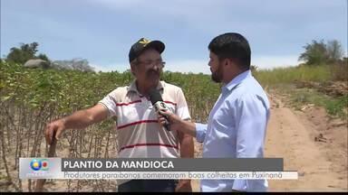 Produção de macaxeira e mandioca na Paraíba - Entenda a diferença entre as duas raízes.