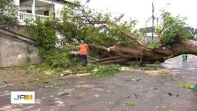 Chuva derruba árvore sobre muro de casa, em Goiânia - Com a queda, fios de eletricidade foram arrancados.