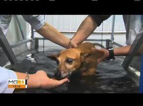 Conheça a história do cãozinho Titio que voltou a andar após uma lesão na medula - Ele teve um problema na medula, ficou sem andar, mas graças a dois veterinários que o adotaram, e com um tratamento especial, está conseguindo levar uma vida mais independente.