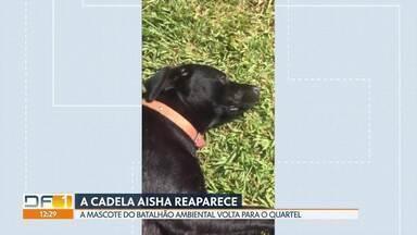 Cadela mascote do Batalhão Ambiental de Águas Claras volta para o quartel - A cadela Aisha tinha desaparecido na sexta-feira passada. Os PMs acham que ela fugiu assustada com o temporal que caiu. Ontem ela apareceu na porta do batalhão.