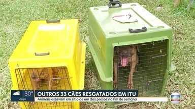 Mais de 30 cães são resgatados em Itu - Animais estavam em sítio de um dos presos na operação do fim de semana