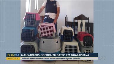 Duas mulheres foram presas suspeitas de maltratar gatos - 20 gatos em situação de maus-tratos foram resgatados em Guarapuava.